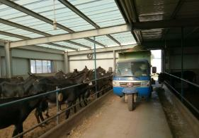 撒料车在驴场中的应用